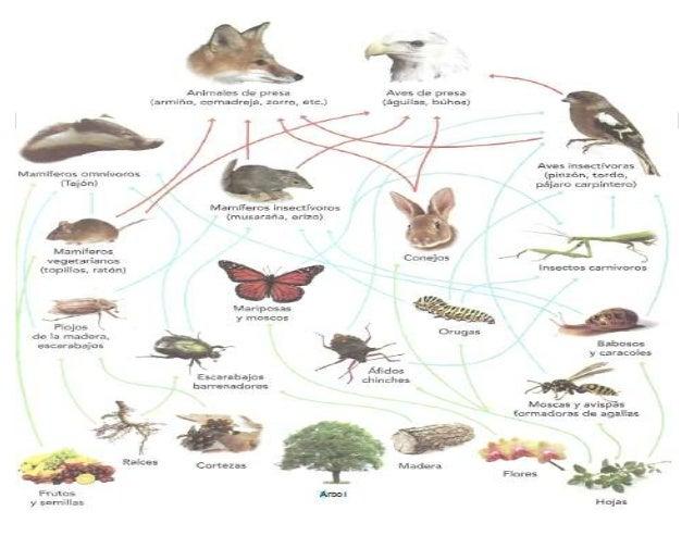 Libro ecologia y medio ambiente