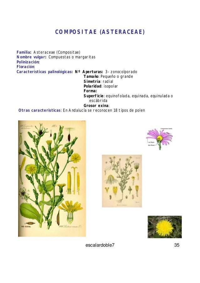 Caracteristicas familia asteraceae pdf converter