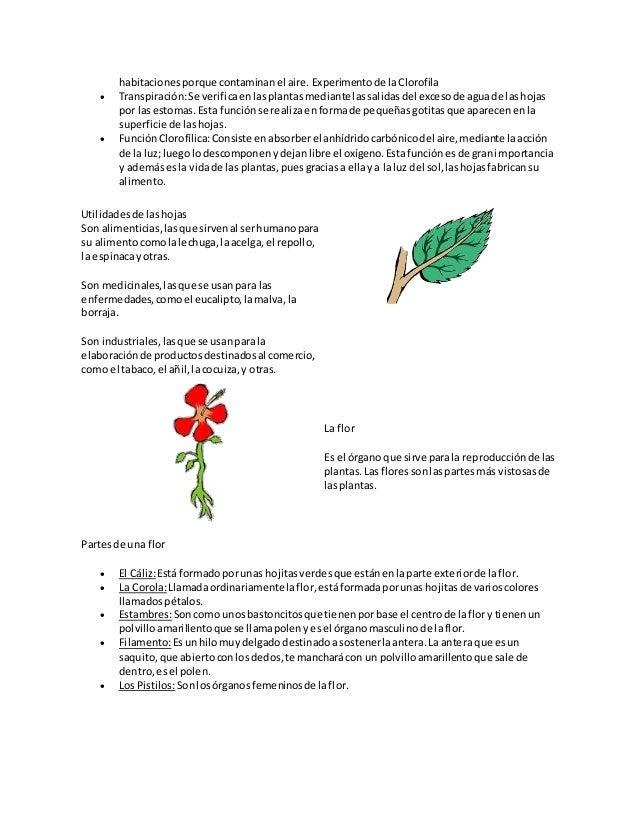 Famoso Anatomía De Planta De Flores Fotos - Anatomía de Las ...