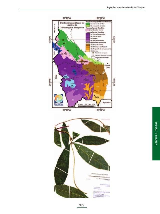Libro Rojo de la Flora Andina de Bolivia