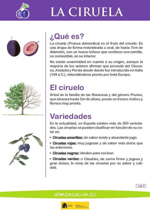 libro sabio de las frutas y las verduras