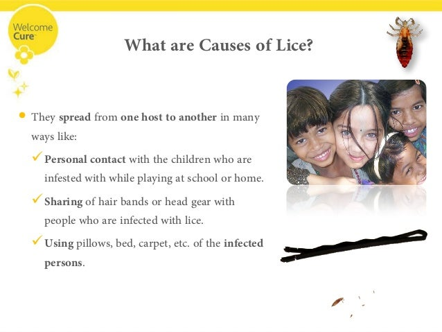 Head Lice Treatment Pictures Symptoms amp Prevention