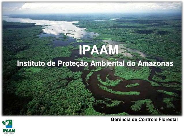 Debate Florestal: licenciamento e exploração florestal por IPAAM