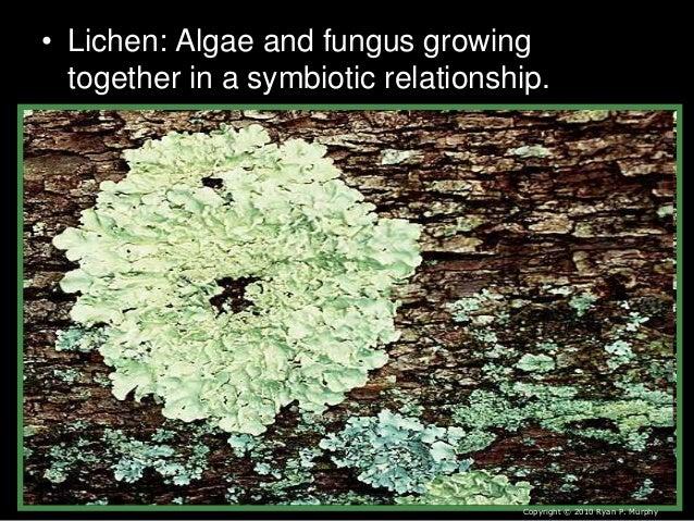 lichen and algae relationship memes