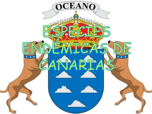 Aeonium canariense.  es una especie de planta perteneciente a la familia Crassulacear. Islas Canarias, en la Gomera, local...