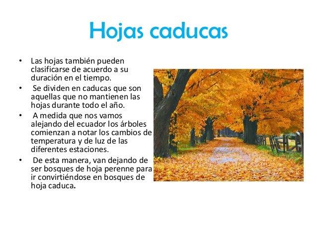 Clasificaci n de las hojas for Arboles de jardin de hoja caduca