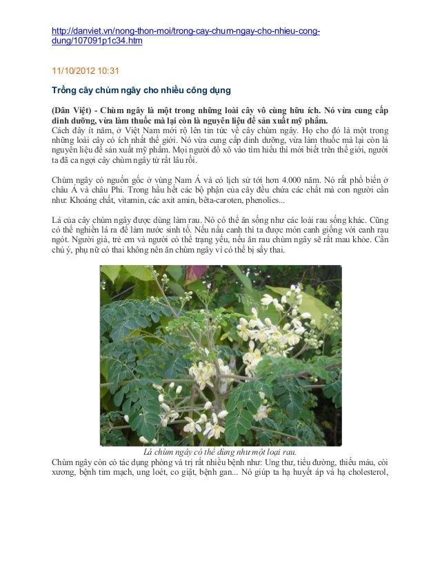 http://danviet.vn/nong-thon-moi/trong-cay-chum-ngay-cho-nhieu-congdung/107091p1c34.htm  11/10/2012 10:31 Trồng cây chùm ng...