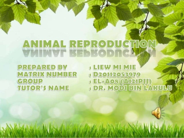 Examples Of     Examples OfSingle Young   Multiple YoungReproduction   Reproduction  Human              Dog   Whale       ...