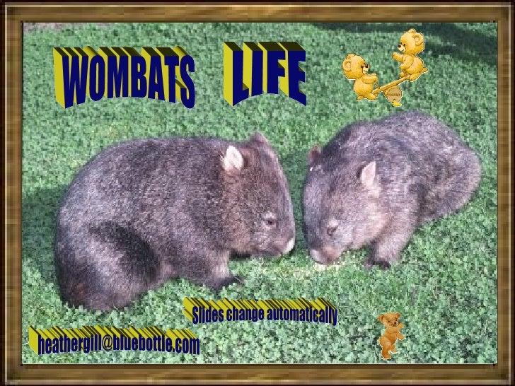 WOMBATS LIFE [email_address] Slides change automatically