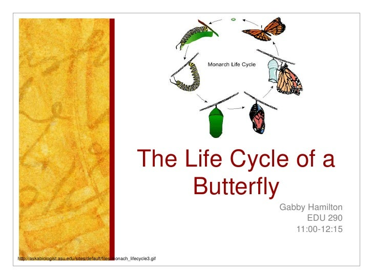 The Life Cycle of a Butterfly <br />Gabby Hamilton<br />EDU 290<br />11:00-12:15 <br />http://askabiologist.asu.edu/sites/...