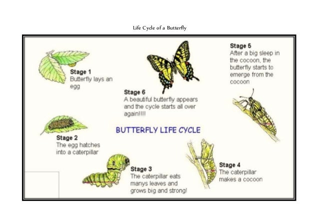 life cycle stages essay