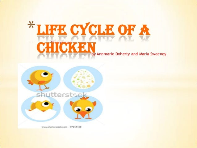 O rang a seby Annmarie Doherty and Maria Sweeney*Life Cycle of aChicken