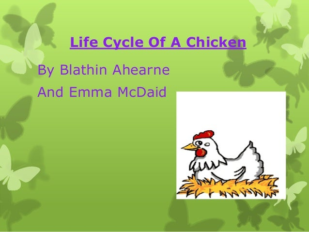 Life Cycle Of A ChickenBy Blathin AhearneAnd Emma McDaid