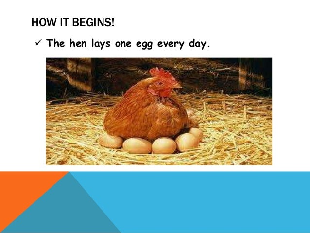 Image Result For Life Cycle Of A Chicken Incubator