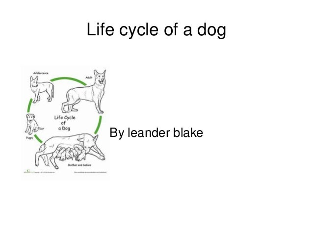 Life cycle of a dog By leander blake