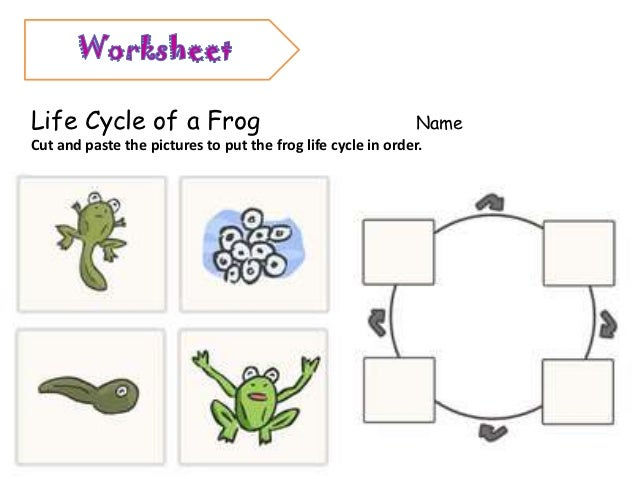 Printables Frog Life Cycle Worksheet frog life cycle worksheet cut and paste bloggakuten