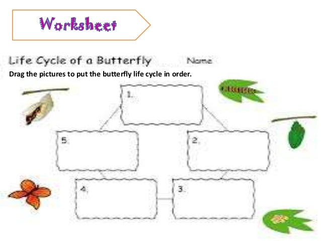 Life cycle of animals worksheet – Life Cycle of Butterfly Worksheet