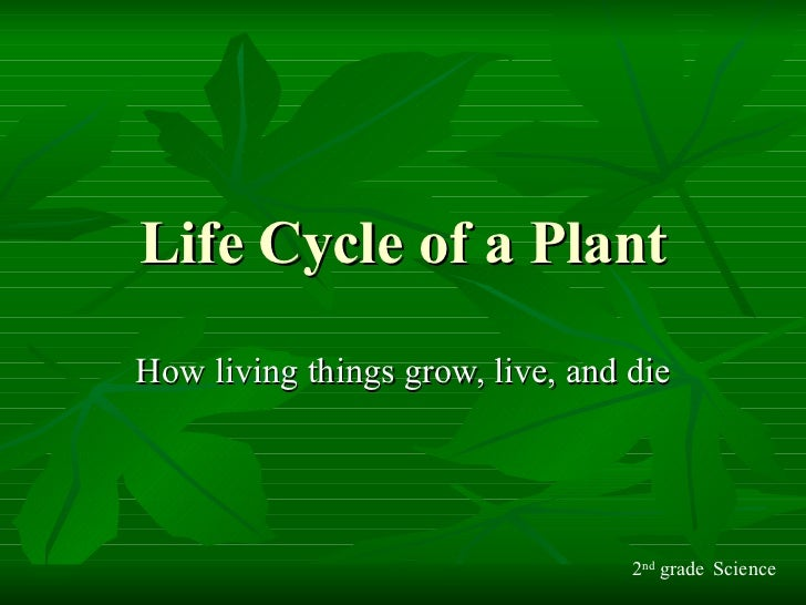Life Cycle of a Plant How living things grow, live, and die 2 nd  grade Science