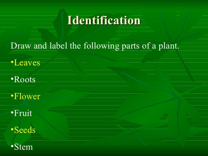 Life Cycle Of A Plant Vocabulary Interactive