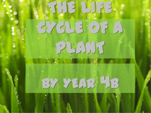 THE LIFECYCLE OF A  PLANTBY YEAR   4B