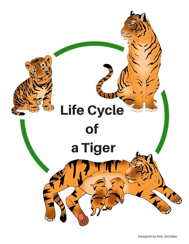 Image result for Life cycle