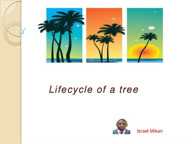 Lifecycle of a tree  Israel Mikan