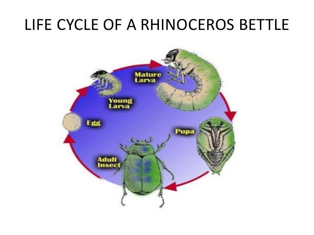 Life cycle of different animals