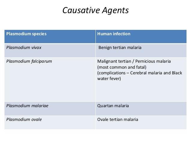 Asexual life cycle of plasmodium species disease