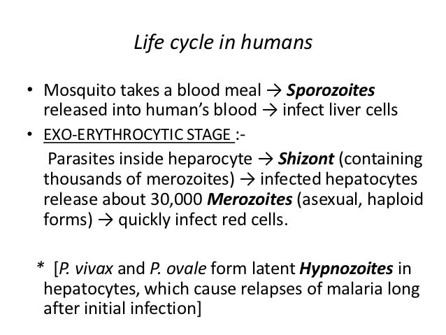 Asexual life cycle of plasmodium in many ways