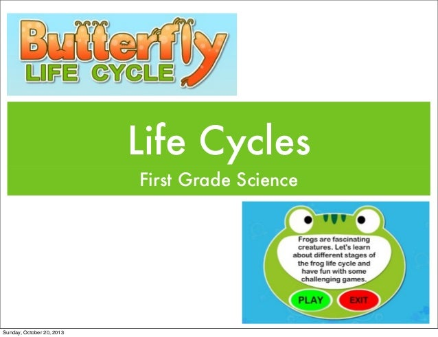 Life Cycles First Grade Science  Sunday, October 20, 2013