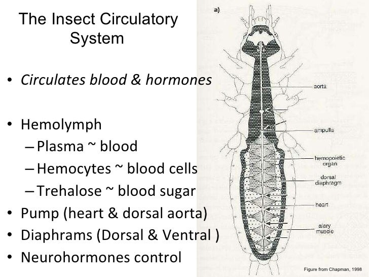 Lifecycles And Internal Anatomy Hummel