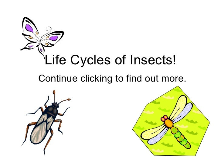 Life Cycles of Insects! Continue clicking to find out more.