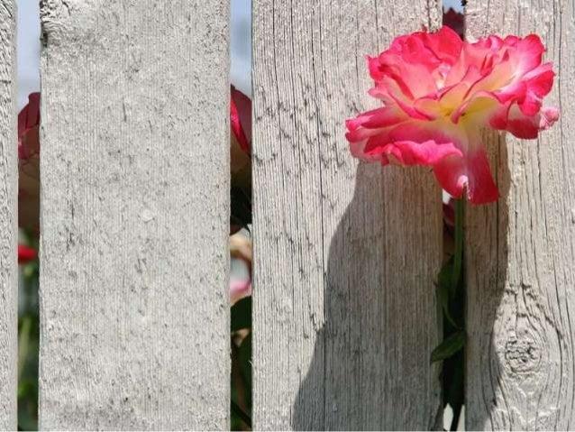 Life is beautiful (v.m.)