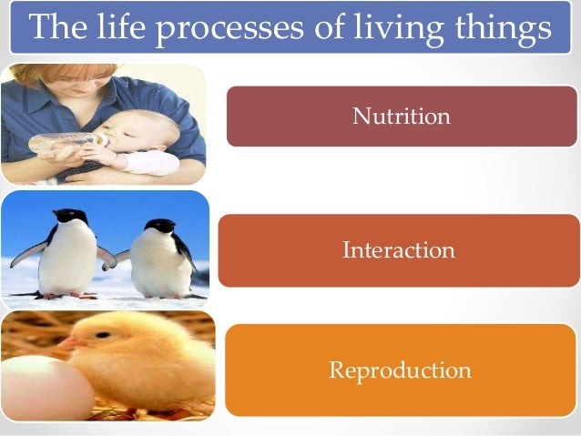 The life processes of living things Nutrition Interaction Reproduction
