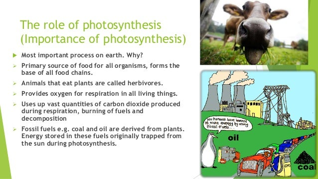 Role of Photosynthesis in Nature