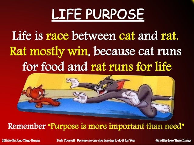 "race cat rat. Rat mostly win rat runs for life Remember ""Purpose is more important than need"" @linkedIn Joao Tiago Ilunga ..."