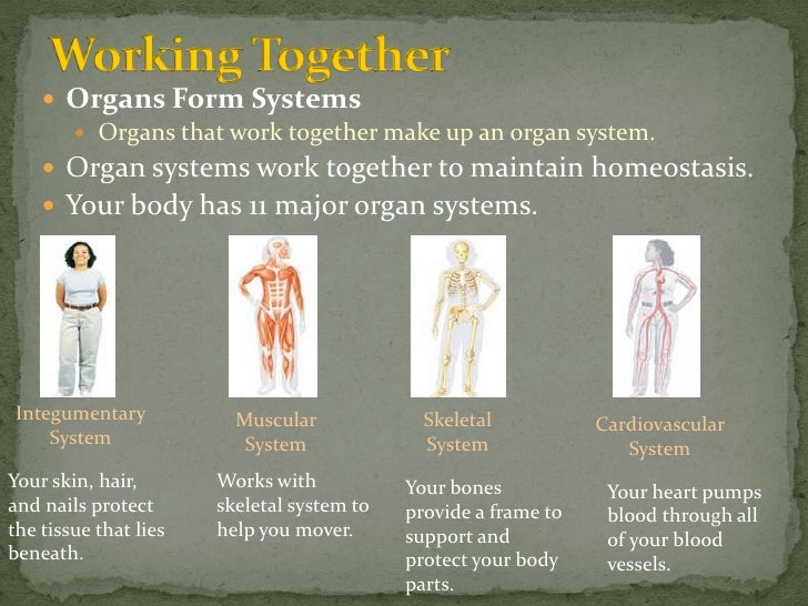 Life Science 1 1 Body Organization