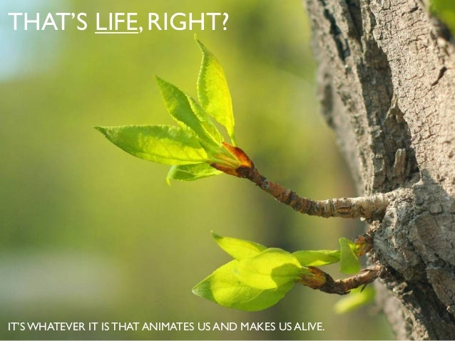 THAT'S LIFE,RIGHT? IT'S WHATEVER IT IS THAT ANIMATES US AND MAKES US ALIVE.