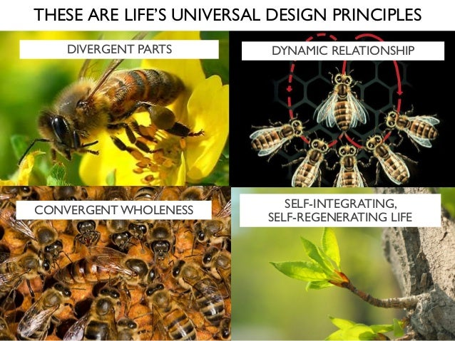 THESE ARE LIFE'S UNIVERSAL DESIGN PRINCIPLES DIVERGENT PARTS DYNAMIC RELATIONSHIP CONVERGENT WHOLENESS SELF-INTEGRATING, S...