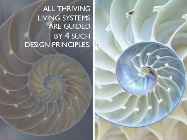 ALL THRIVING LIVING SYSTEMS ARE GUIDED BY 4 SUCH DESIGN PRINCIPLES.