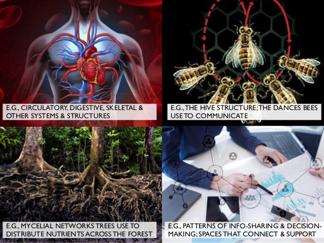 E.G., CIRCULATORY, DIGESTIVE, SKELETAL & OTHER SYSTEMS & STRUCTURES E.G.,THE HIVE STRUCTURE;THE DANCES BEES USE TO COMMUNI...