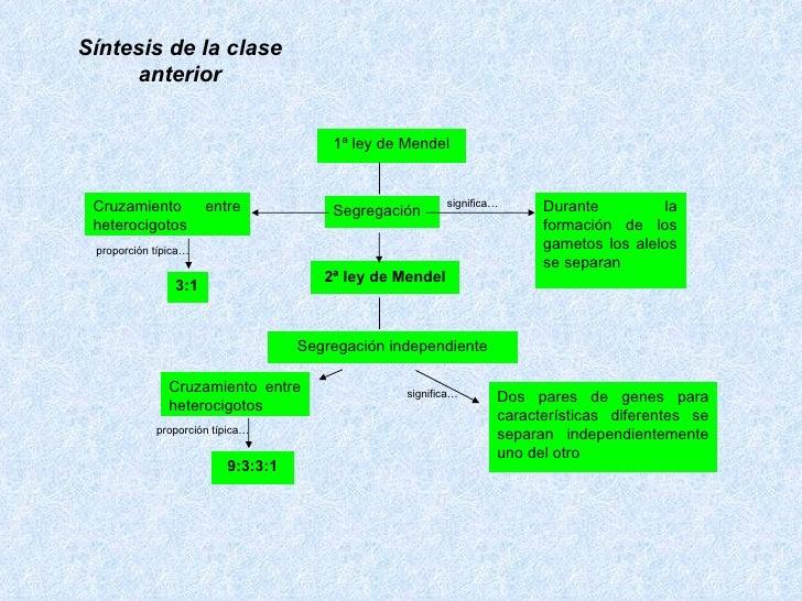 1ª ley de Mendel 2ª ley de Mendel Segregación independiente Segregación   Durante la formación de los gametos los alelos s...