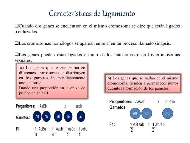 Ligamiento Y Entrecruzamiento Genetico Pdf