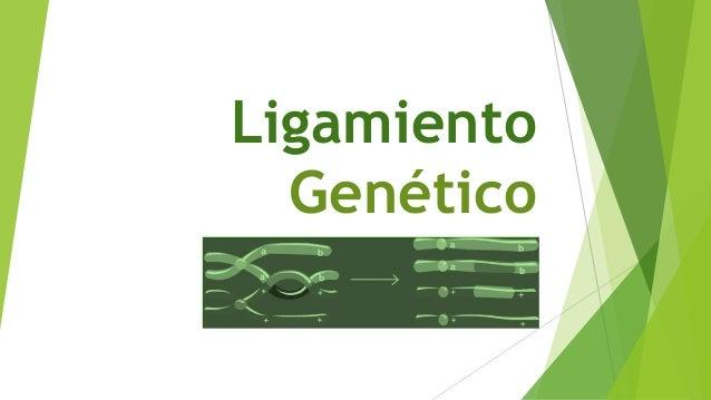 Ligamiento Genético
