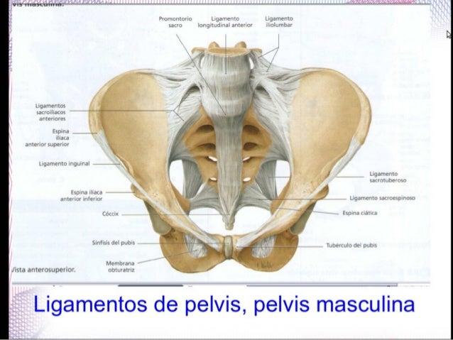 Ligamentos y articulaciones de cadera, aplicación clínica: hernia ing…