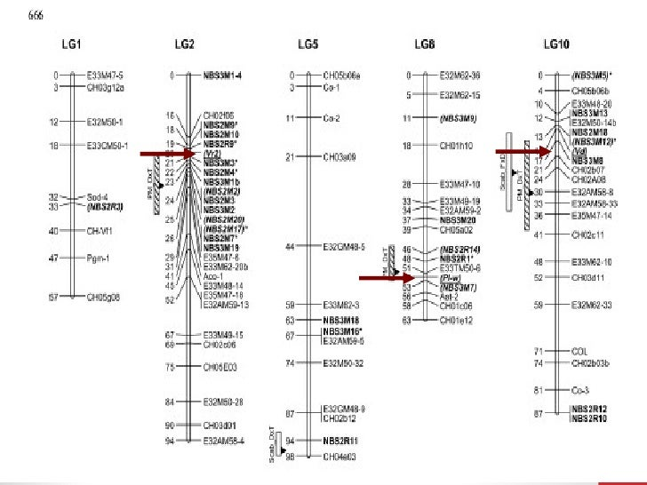 Ligação, permuta, mapas genéticos 2010