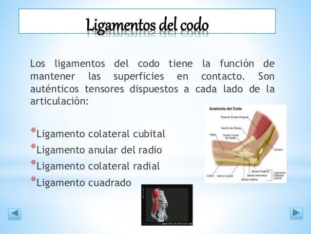 Ligamentos del codo - Ismael Villacís
