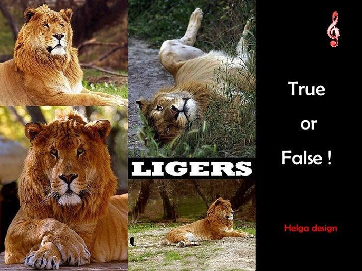 True or  False ! Helga design