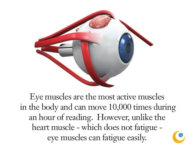 eye facts, Muscles