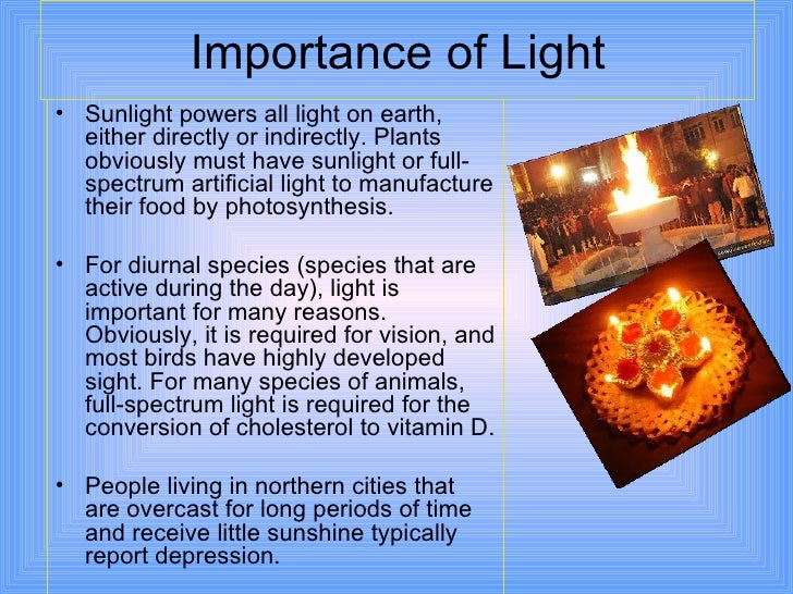 why is sunlight important to plants